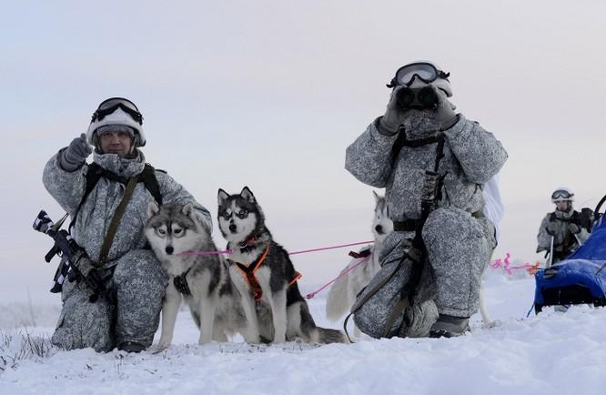 Clip tuần lộc và chó kéo xe tham gia huấn luyện tác chiến của Nga ảnh 8