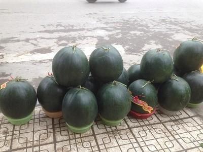 Dưa khổng lồ đổ bộ về Hà Nội ngày cận Tết ảnh 3