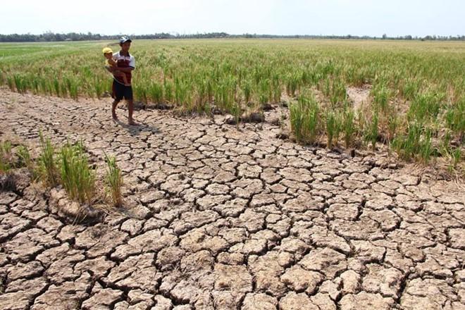 Hạn mặn sông Mekong: Thảm họa được báo trước ảnh 1