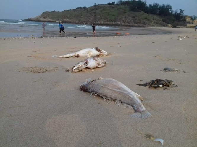 Vụ cá chết hàng loạt: Nghi vấn tàu nước ngoài thả độc ảnh 1