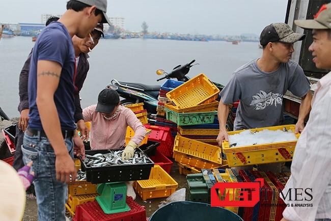 Đà Nẵng sẽ kiểm soát nguồn gốc và chất lượng cá đưa ra thị trường Đà Nẵng