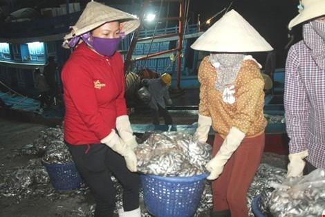 Vừa cập cảng, ngư dân Quảng Bình đã thu cả trăm triệu đồng ảnh 5