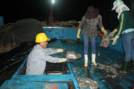 Vừa cập cảng, ngư dân Quảng Bình đã thu cả trăm triệu đồng ảnh 7