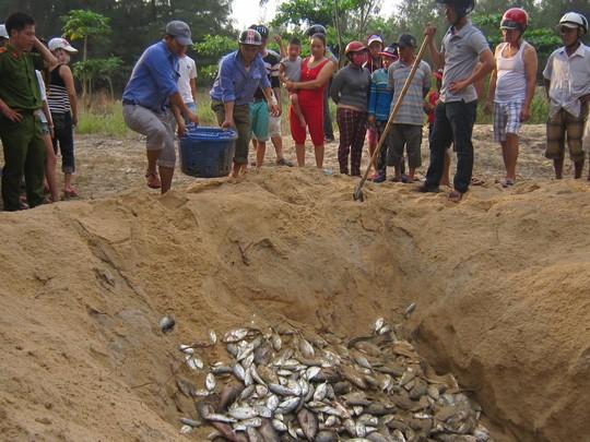 Cá biển lờ đờ lại ào ạt vào bờ, cá nuôi chết hàng loạt ảnh 3