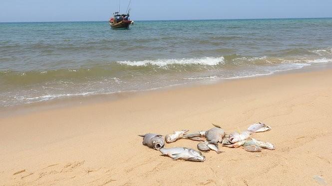 Sau Formosa, sẽ kiểm tra 2 doanh nghiệp xả thải ra biển ảnh 2