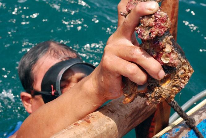 Đáy biển Quảng Bình: Cá chết không thấy, cá sống lèo tèo ảnh 2