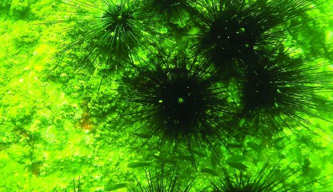 Đáy biển Quảng Bình: Cá chết không thấy, cá sống lèo tèo ảnh 1