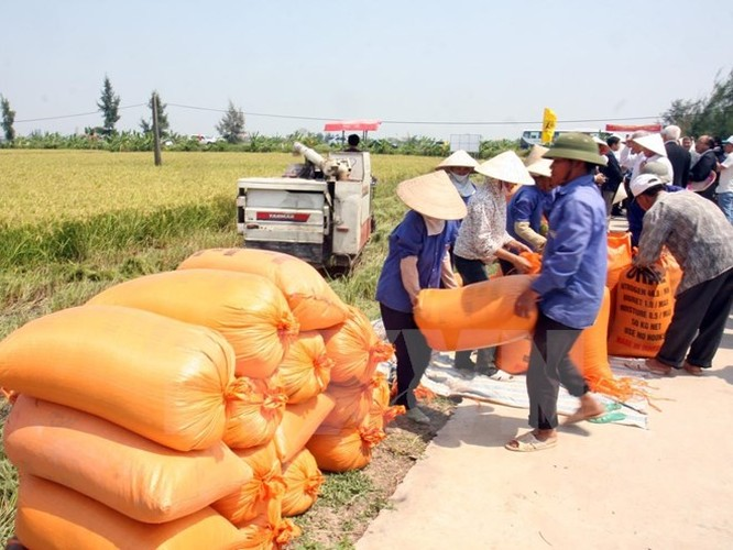 """Hiệp hội Lương thực Việt làm gì khi Thái Lan xả kho gạo """"khủng""""? ảnh 1"""