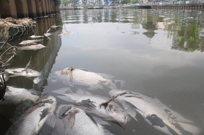 Clip cá tiếp tục chết trắng kênh Nhiêu Lộc - Thị Nghè ảnh 4