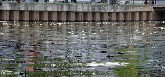 Clip cá tiếp tục chết trắng kênh Nhiêu Lộc - Thị Nghè ảnh 5