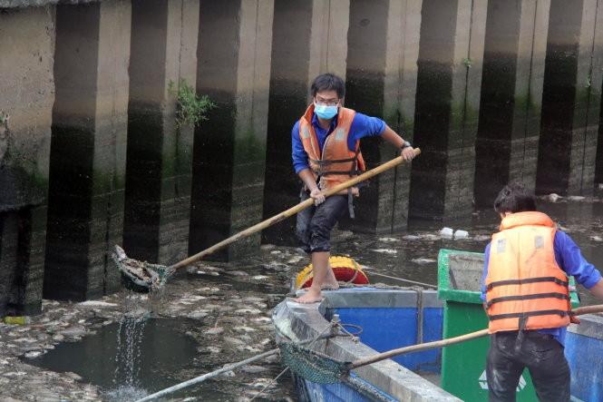 Đã vớt gần 70 tấn cá chết trên kênh Nhiêu Lộc - Thị Nghè ảnh 3