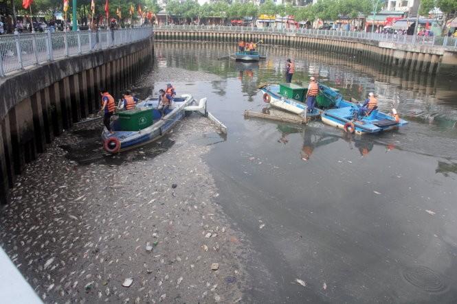 Đã vớt gần 70 tấn cá chết trên kênh Nhiêu Lộc - Thị Nghè ảnh 2