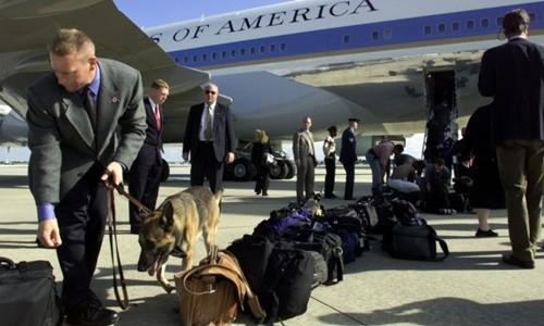 """Chó nghiệp vụ Mỹ """"sục sạo"""" Nội Bài, dọn đường đón Tổng thống Obama ảnh 1"""