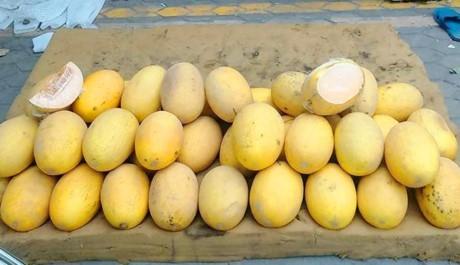 11.000 tấn dưa vàng Trung Quốc gắn mác hàng Việt ảnh 1