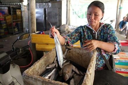 """""""Cần xác định cá nào sạch, để chúng tôi còn buôn bán"""" ảnh 1"""