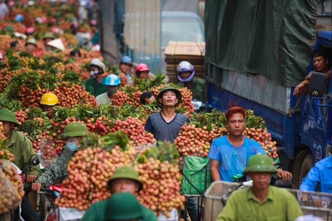 Nghi vấn gây tắc nghẽn thủ phủ vải Bắc Giang để ép giá thu mua ảnh 9