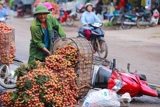 Nghi vấn gây tắc nghẽn thủ phủ vải Bắc Giang để ép giá thu mua ảnh 10