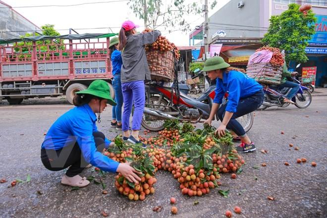 Nghi vấn gây tắc nghẽn thủ phủ vải Bắc Giang để ép giá thu mua ảnh 11