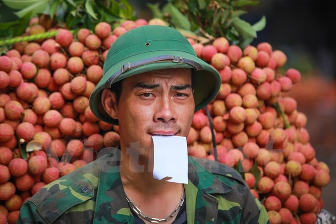 Nghi vấn gây tắc nghẽn thủ phủ vải Bắc Giang để ép giá thu mua ảnh 12