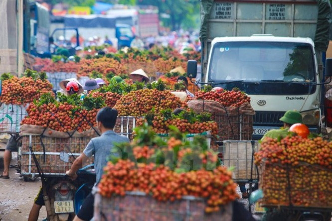 Nghi vấn gây tắc nghẽn thủ phủ vải Bắc Giang để ép giá thu mua ảnh 2