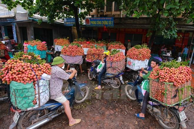 Nghi vấn gây tắc nghẽn thủ phủ vải Bắc Giang để ép giá thu mua ảnh 3