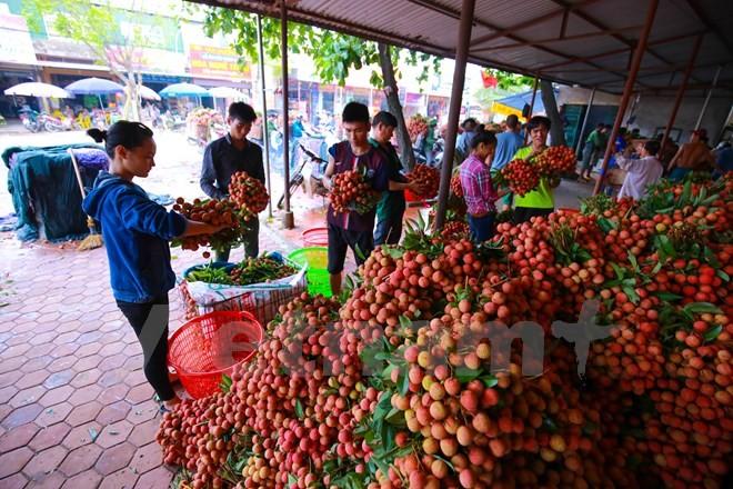 Nghi vấn gây tắc nghẽn thủ phủ vải Bắc Giang để ép giá thu mua ảnh 4