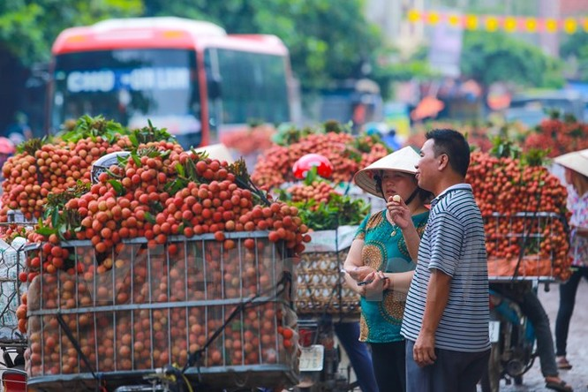 Nghi vấn gây tắc nghẽn thủ phủ vải Bắc Giang để ép giá thu mua ảnh 6