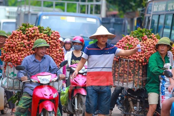 Nghi vấn gây tắc nghẽn thủ phủ vải Bắc Giang để ép giá thu mua ảnh 7