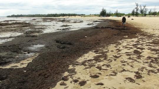Rong biển chết dạt vào bờ biển chỉ là hiện tượng tự nhiên ảnh 3