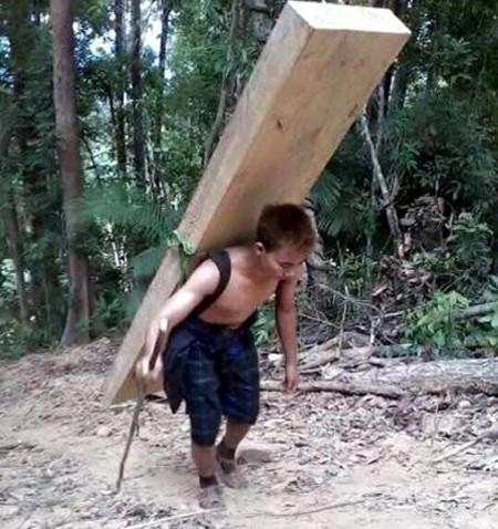 Đường dây phá rừng pơ mu ở biên giới Quảng Nam ảnh 1