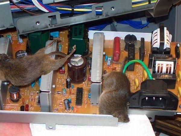 Những bộ máy tính bẩn đến mức thợ sửa nhìn vào phải phát khóc ảnh 3