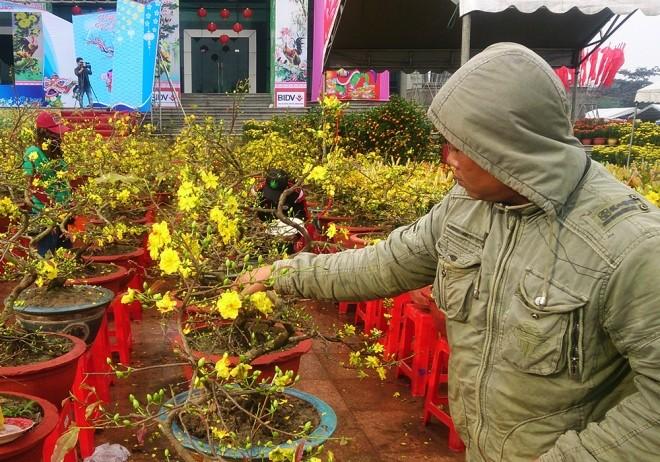 Chợ hoa Tết miền Trung nhộn nhịp ảnh 8