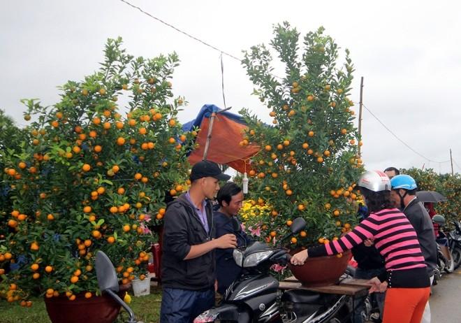 Chợ hoa Tết miền Trung nhộn nhịp ảnh 1