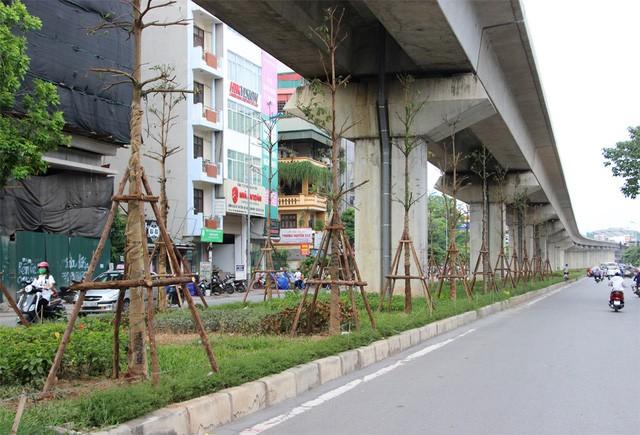 Hà Nội trồng cây dưới gầm đường sắt trên cao ảnh 1