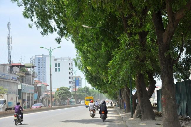 Bí thư Hà Nội nói về việc chặt hạ 1.300 cây xanh ảnh 1