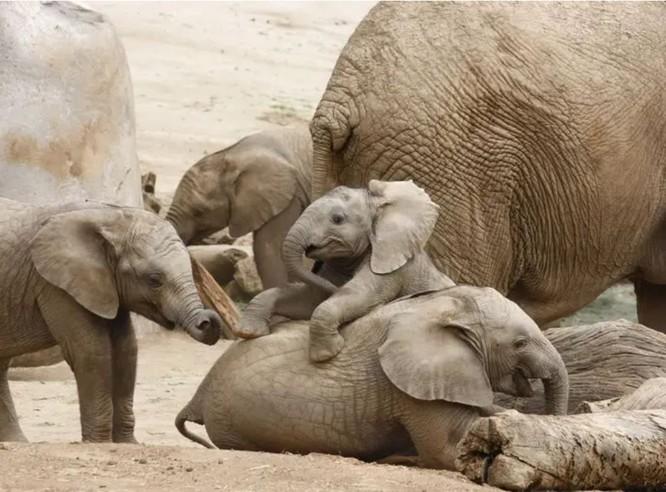 10 sự thật dễ thương về các loài động vật ảnh 4