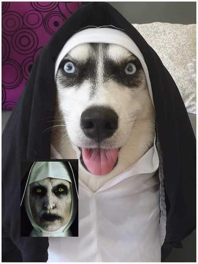 """""""Té ngửa"""" với diện mạo của những chú chó trong ngày Halloween ảnh 2"""
