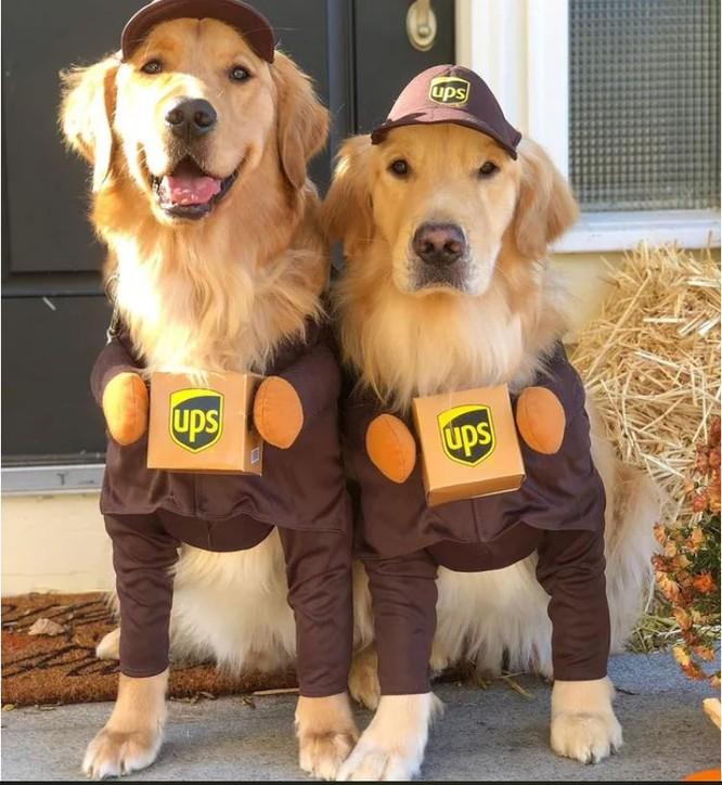 """""""Té ngửa"""" với diện mạo của những chú chó trong ngày Halloween ảnh 6"""