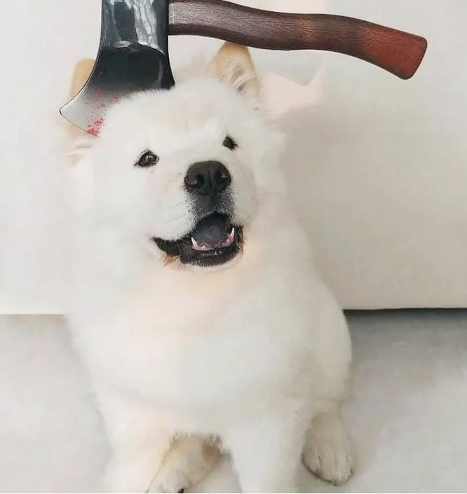"""""""Té ngửa"""" với diện mạo của những chú chó trong ngày Halloween ảnh 10"""