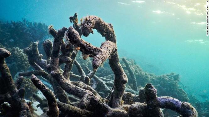 Sử dụng loa để hồi sinh các rạn san hô, ý tưởng sáng tạo của các nhà khoa học ảnh 2