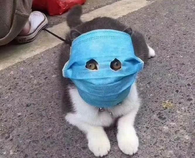 Virus Corona có thể lây nhiễm trên chó, mèo? ảnh 2