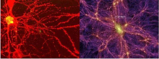 Những điểm tương đồng kỳ lạ về cấu trúc giữa não bộ con người và vũ trụ ảnh 1