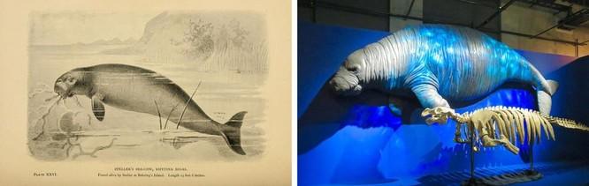 Con người đã đóng vai trò gì trong sự tuyệt chủng của các loài hiện đại? ảnh 4