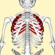 10 bộ phận trên cơ thể người có thể sẽ biến mất trong tương lai - Ảnh 9.