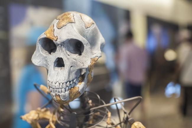 Bộ não con người đang ngày một nhỏ đi kể từ thời kỳ đồ đá ảnh 1