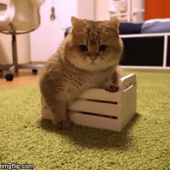 23 hình ảnh chứng minh loài mèo có thể yên vị ở bất cứ đâu ảnh 23