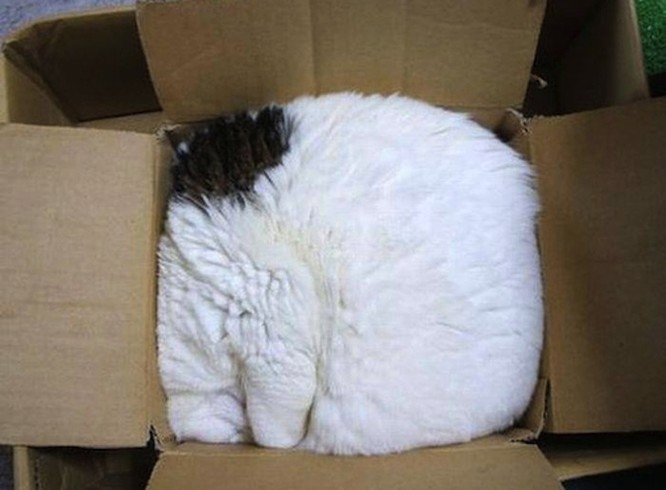 23 hình ảnh chứng minh loài mèo có thể yên vị ở bất cứ đâu ảnh 19