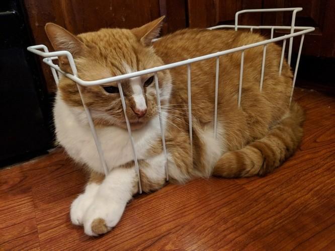 23 hình ảnh chứng minh loài mèo có thể yên vị ở bất cứ đâu ảnh 18