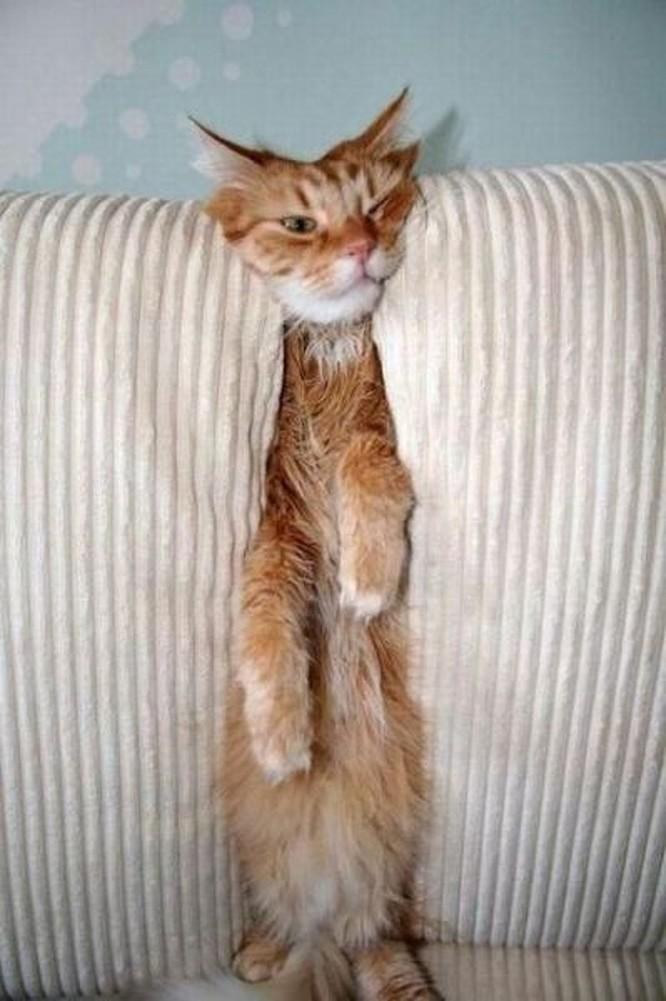 23 hình ảnh chứng minh loài mèo có thể yên vị ở bất cứ đâu ảnh 16