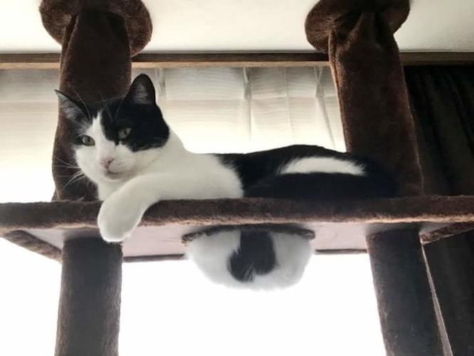 23 hình ảnh chứng minh loài mèo có thể yên vị ở bất cứ đâu ảnh 9